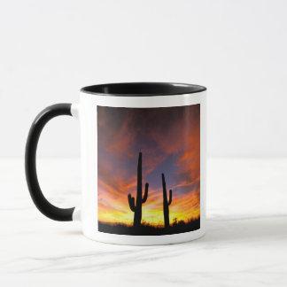 Mug L'Amérique du Nord, Etats-Unis, Arizona, désert de