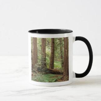 Mug L'Amérique du Nord, Etats-Unis, la Californie,