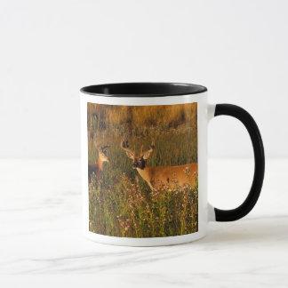 Mug L'Amérique du Nord, Etats-Unis, Montana, bison