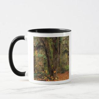 Mug L'Amérique du Nord ; LES Etats-Unis ; Washington,