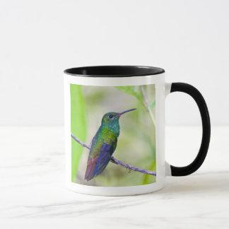 Mug L'Amérique du Sud, Costa Rica, Sarapiqui, selva de