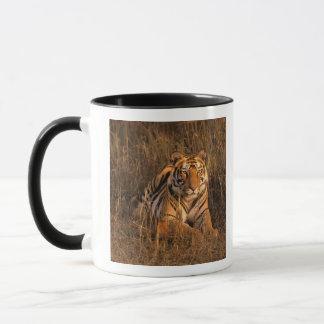 Mug L'Asie, Inde, parc national de Bandhavgarh. Tigre