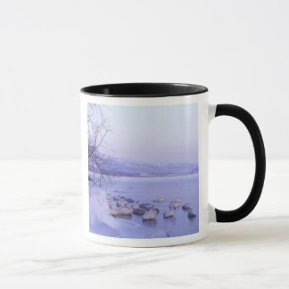 Mug L'Asie, Japon, Hokkaido, Akan NP, cygnes de gros