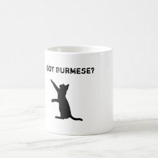 "Mug Le chat birman espiègle avec ""est devenu birman ?"""