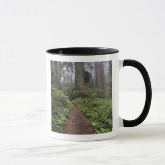 Mug Le chemin à travers les arbres géants de séquoia a