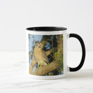 Mug le faucon rouge-épaulé, lineatus de Buteo, se