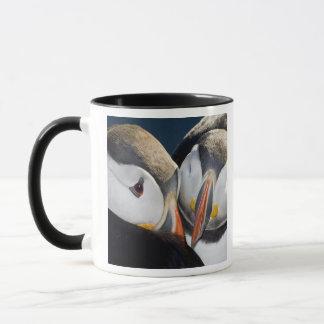 Mug Le macareux atlantique, un oiseau marin pélagique,