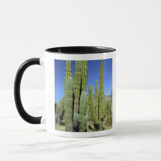 Mug Le Mexique, Sonora, São Carlos. Tuyau de Saguaro