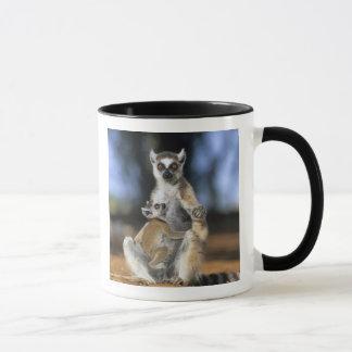 Mug lémur Anneau-coupé la queue, (catta de lémur),