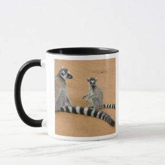Mug lémurs Anneau-coupés la queue, (catta de lémur),