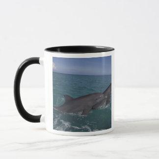 Mug Les Caraïbe, Tursiops 2 de dauphins de Bottlenose