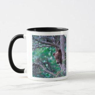 Mug Les Etats-Unis, Alaska, Katmai NP, petit animal