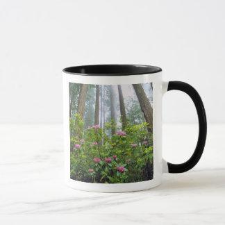 Mug Les Etats-Unis, la Californie, séquoia NP.