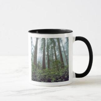 Mug Les Etats-Unis, la Californie, séquoia NP. Le