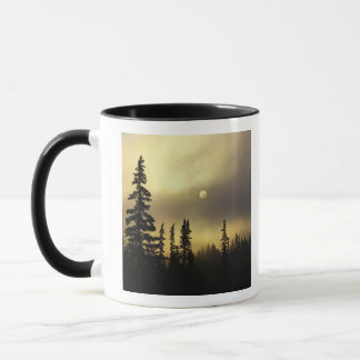 Mug Les Etats-Unis, le Colorado, forêt nationale de