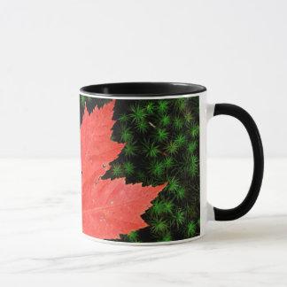 Mug Les Etats-Unis, Missouri, réserve forestière de