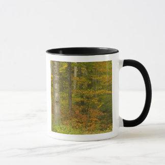 Mug Les Etats-Unis, New Hampshire, Livermore, montagne