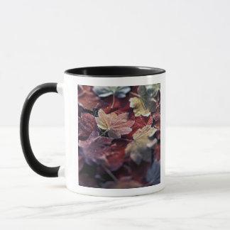 Mug Les Etats-Unis, nord-ouest Pacifique. Feuille