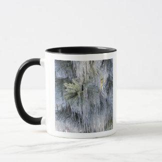 Mug Les Etats-Unis, Orégon, courbure. La glace sur le