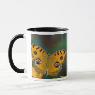 Mug Les Etats-Unis, WA, Sammamish, Butterfy tropical