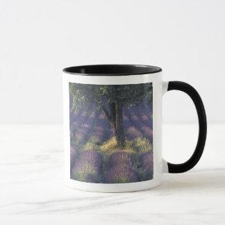 Mug L'Europe, France, Provence, Sault, lavande