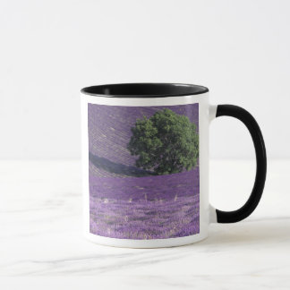 Mug L'Europe, France, Provence, Sault, lavande met en