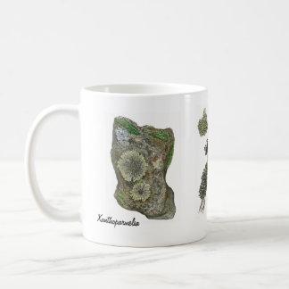 Mug Lichens 2