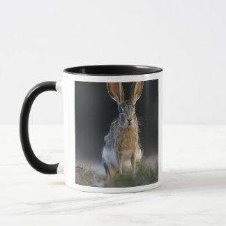 Mug Lièvre à queue noire, californicus de Lepus, 2