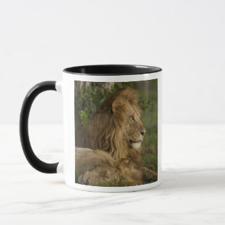 Mug Lion, Panthera Lion, Mara inférieur, masai Mara