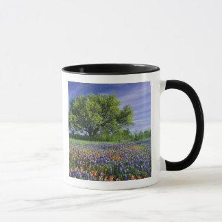 Mug Live Oak et pinceau du Texas, et le Texas
