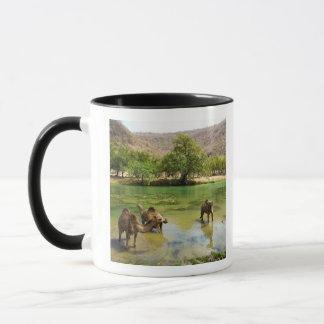 Mug L'Oman, darbat de Wadi, dromadaires pâturant dans