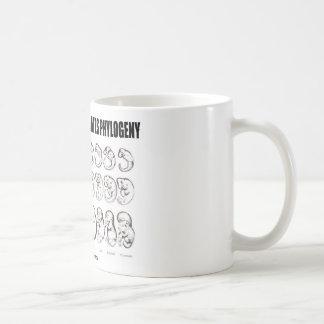 Mug L'ontogénèse récapitule la phylogénie (la
