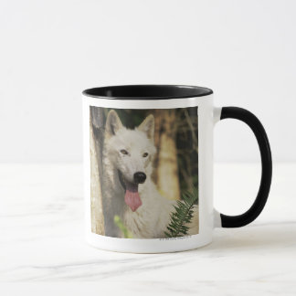 Mug Loup arctique dans la forêt