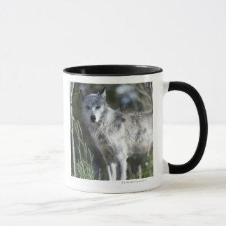 Mug Loup dans Yellowstone