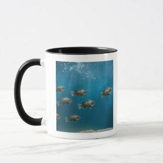Mug L'une Mer Noire basse menant une école