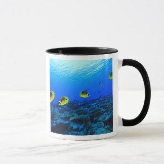 Mug Lunula de Chaetodon de Butterflyfish de Racoon),