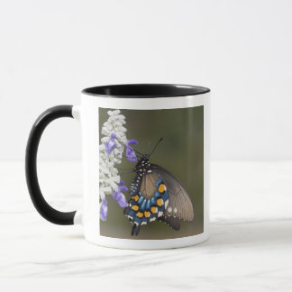 Mug Machaon de Pipevine, philenor de Battus, adulte