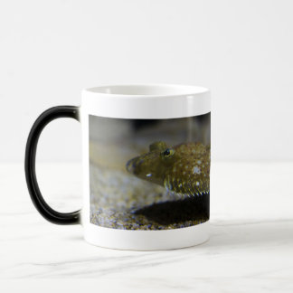 Mug Magic Poissons plats