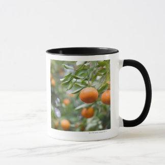 Mug Mandarines accrochant dans l'arbre