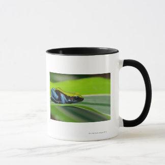 Mug mantella Vert-soutenu