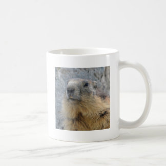 Mug Marmotte alpine de plan rapproché