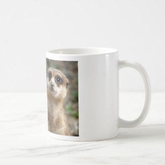 Mug Meerkat Grand-Eyed mignon