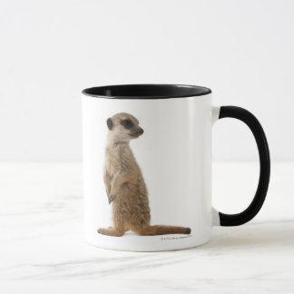 Mug Meerkat ou Suricate - suricatta de Suricata