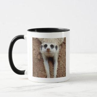 Mug Meerkat (Suricata Suricatta) refroidissant