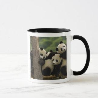 Mug Melanoleuca d'Ailuropoda de bébés de panda géant)