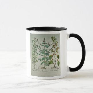 Mug Menthe : Crispa de Mentha
