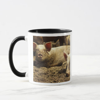 Mug MOIS : Chambre Genevieve, ferme de porc