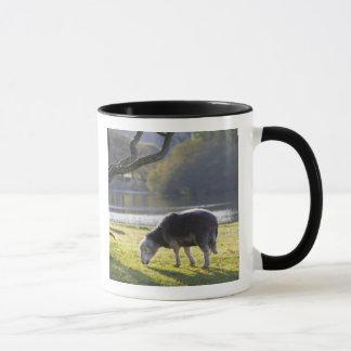 Mug Moutons de Herdwick au rocher de moines,