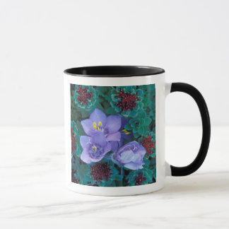 Mug Na, Etats-Unis, Alaska, îles Aléutes, fleurs