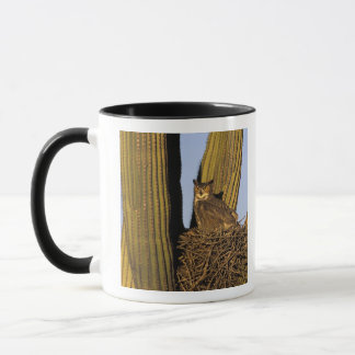 Mug Na, Etats-Unis, Arizona, Tucson. Grand hibou à
